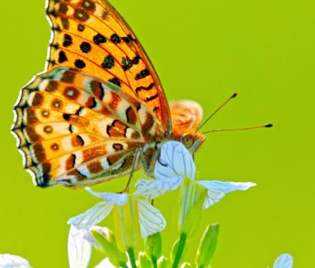 两只蝴蝶歌曲
