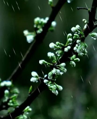 歌曲三月里的小雨